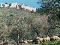 Azienda Agricola Polidori