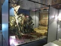 Museo Paleontologico Terni