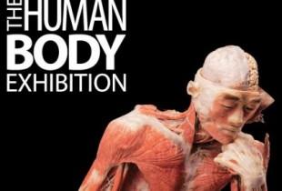 thehumanbody
