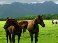 A cavallo in Friuli