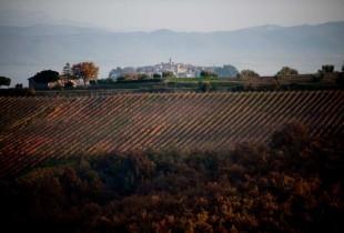 Azienda Conti Faina, Collelungo di San Venanzo