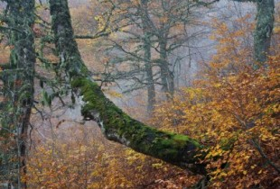 autunno creativo