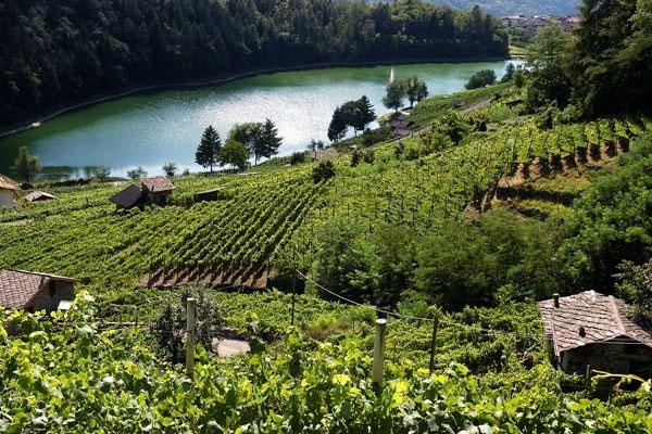La strada del vino e dei sapori della Vallagarina