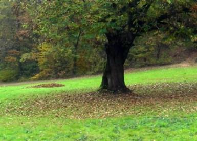 Il sentiero della castagna grande