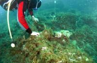 L'itinerario archeologico sottomarino di Mongerbino