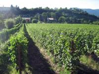 Azienda Agricola Cascina Valle