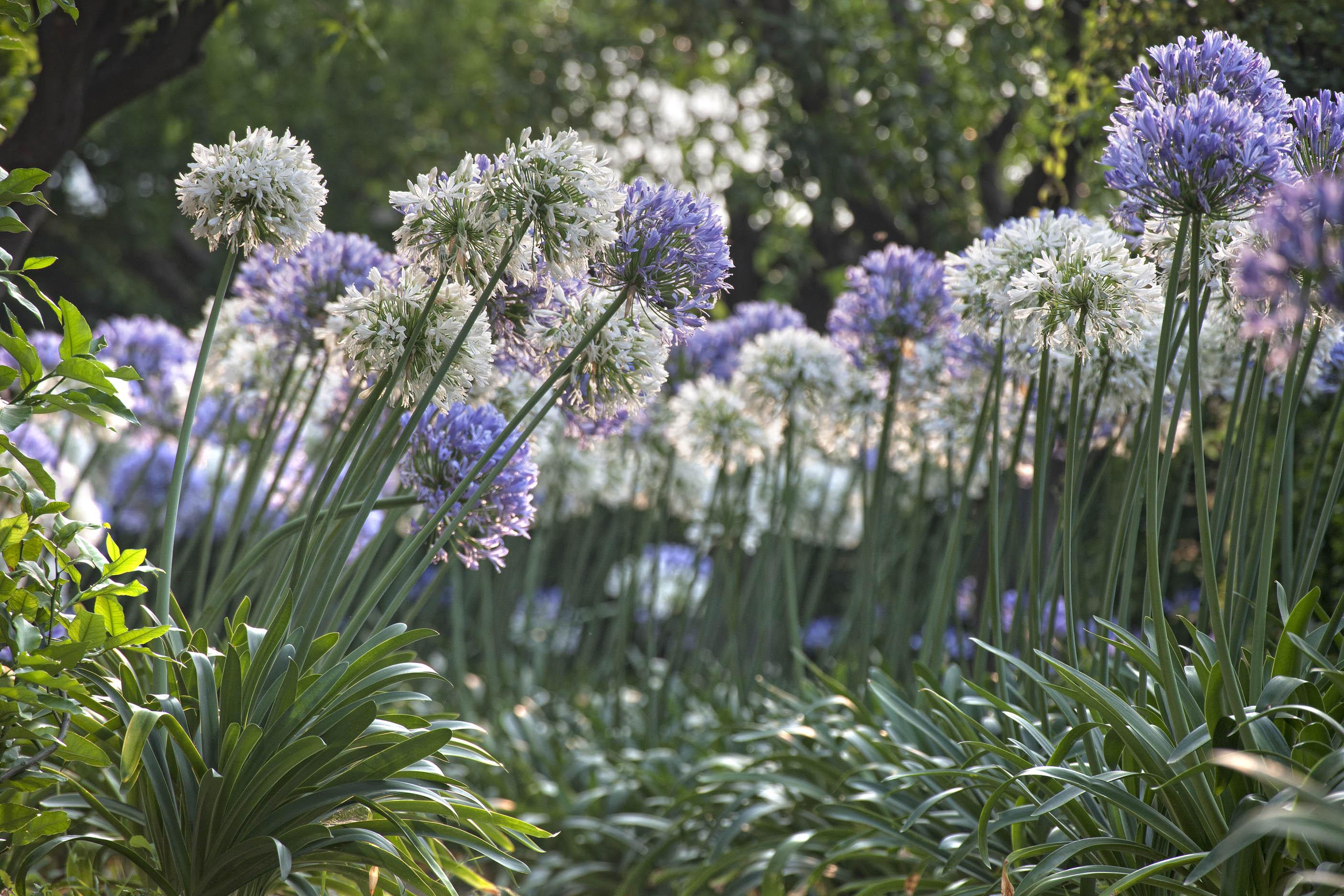 I fiori dell'amore di Villa della Pergola